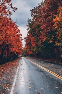 480x854 Autumn Road Trees On Sides Fallen Leaves