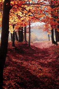 480x800 Autumn Woods Trees Fall Forest 5k