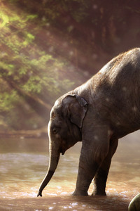 360x640 Baby Elephant Drinking Water