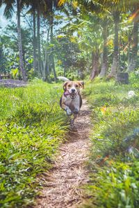 2160x3840 Beagle Dog In Joy
