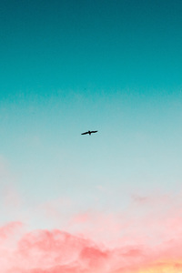 1080x1920 Beautiful Sky Clouds Bird Flying 4k