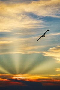 1080x1920 Bird Flying Sunset Evening View Clouds Beautiful Sky 5k