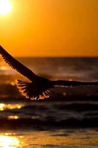 Bird Sunset