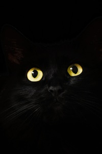 640x1136 Black Cat Eyes Dark 5k