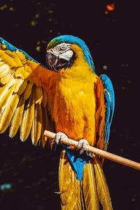 2160x3840 Blue And Yellow Macaw 5k