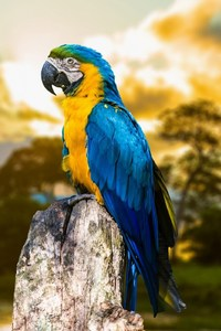 1125x2436 Blue And Yellow Macaw
