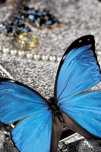 Blue Butterfly On Pearls