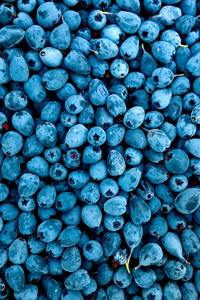 640x960 Blueberries