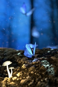 Butterfly Mushrooms Forest Fantasy