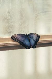 480x854 Butterfly Sitting Window 5k