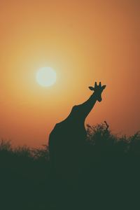 540x960 Camel Silhouette