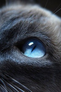 Cat Eyes Closeup