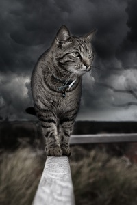640x1136 Cat Photo Manipulation 4k