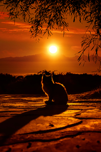 2160x3840 Cat Watching Sunset 4k