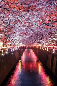480x800 Cherry Blossom Trees Covering River Canal