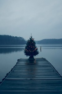 Christmas Tree On Pier