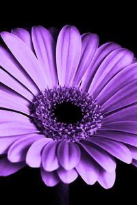720x1280 Close Up Of Purple Petaled Flower