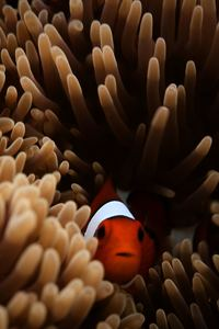 2160x3840 Clownfish Sea 5k