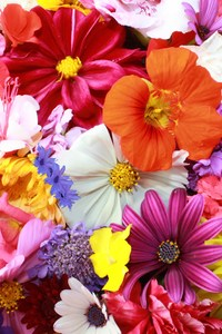 Colorful HD Flowers