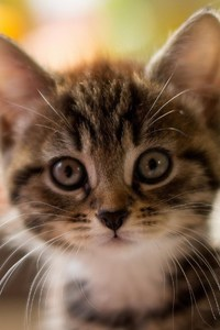 720x1280 Cute Kitty