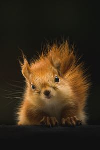 1080x1920 Cute Squirrel 4k
