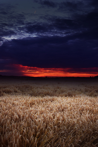 640x960 Dark Field Covered By Clouds Sunset 5k