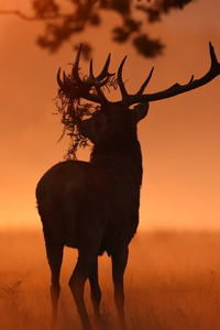320x480 Deer Sunlight Nature