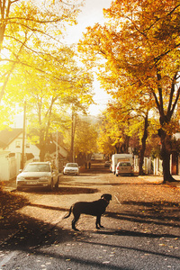 Dog On Concrete Road Homes Trees Sunlights 4k
