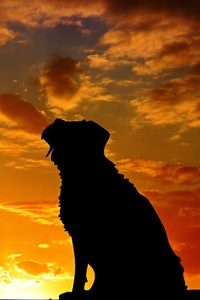 Dogs Silhouette 4k