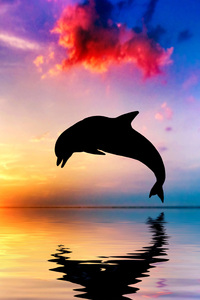 320x568 Dolphin Jumping Out Of Water Sunset View 4k