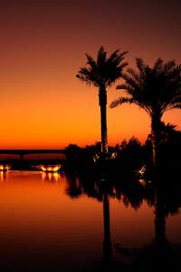 2160x3840 Dubai Palm Trees Sunset Reflection