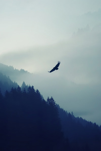 1080x1920 Eagle Over The Mountain