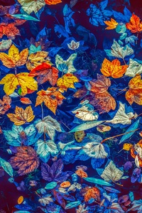 540x960 Fallen Leaves In Water 5k