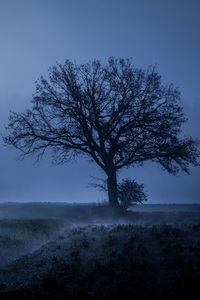 320x480 Field Fog Trees Blue Weather Cold 4k 5k