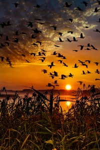 1440x2560 Flock Of Birds Flying At Dawn Time