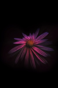 1280x2120 Flower Dark Background 4k