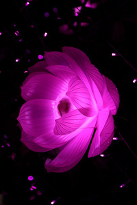 750x1334 Flower Shape Artistic Light