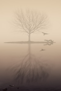 Fog Lake Silhouette Tree Birds