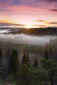 640x1136 Foggy Sunrise National Park