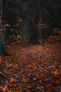320x568 Forest Fall Leaf