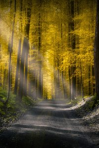 1280x2120 Forests Roads Rays Of Light 5k