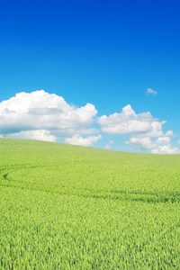 Green Landscape Beautiful