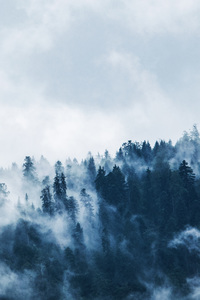 480x800 Green Pine Trees Covered With Fogs 5k