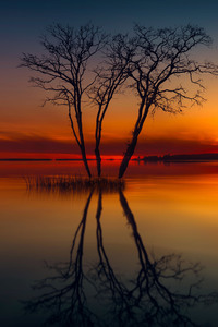 320x568 Horizon Lake Nature Reflection Sunset Tree