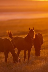 540x960 Horse Photography