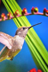 800x1280 Hummingbird Bird