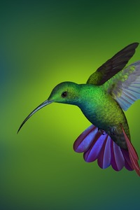 320x568 Hummingbird Hd