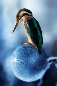 320x568 Kingfisher Bird Sitting