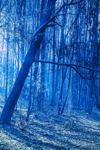 320x568 Last Blue Light Of Evening In Woods
