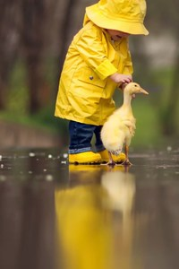 750x1334 Little Boy Child Playing With Ducks